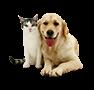 Animals (Pets)