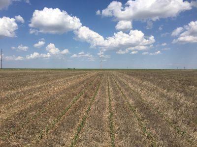 No-Till Farming…Right or Wrong?